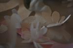 detalle florecillas