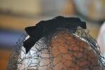Detalle del lazo de terciopelo del velo