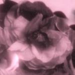 Flores de seda vintage
